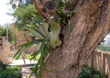 fern_in_tree