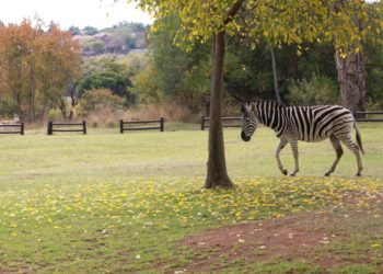 Moroleta Park Reserve - Kloof B&B