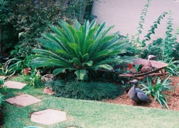 Cycad - Kloof B&B